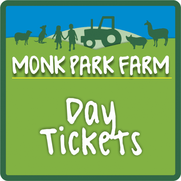 Day Ticket Icon